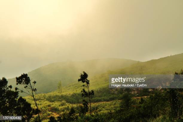 scenic view of trees and mountains against sky - monchique stock pictures, royalty-free photos & images