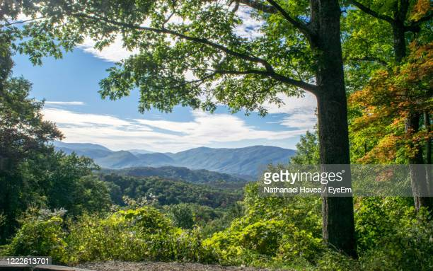 scenic view of trees and mountains against sky - pigeon forge stock pictures, royalty-free photos & images