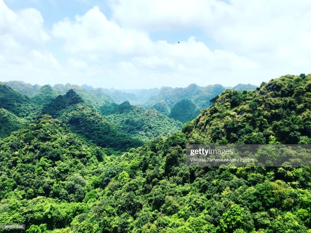 Scenic View Of Trees And Mountains Against Sky : Stock Photo