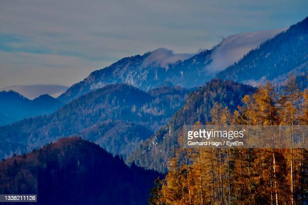 scenic view of trees and mountains with fog against sky in autumn - gerhard hagn stock-fotos und bilder