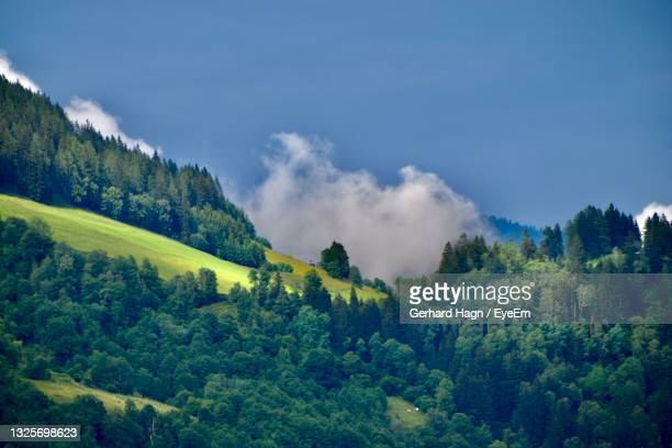 scenic view of trees and mountains with rising fog against sky - gerhard hagn stock-fotos und bilder
