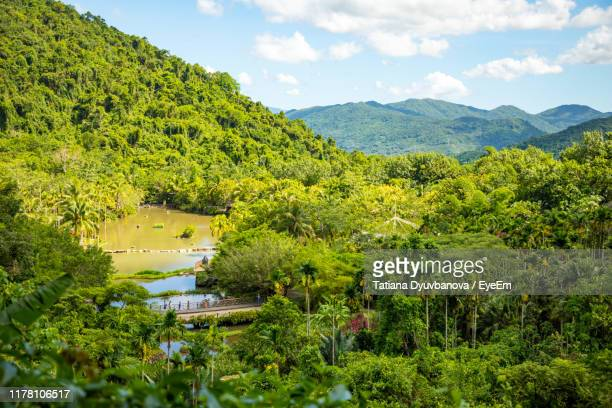 scenic view of trees and plants against sky - hainan island stock pictures, royalty-free photos & images