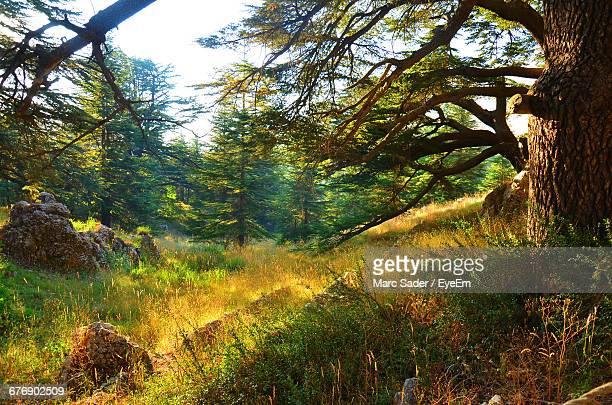 scenic view of trees and plants growing in forest - zeder stock-fotos und bilder