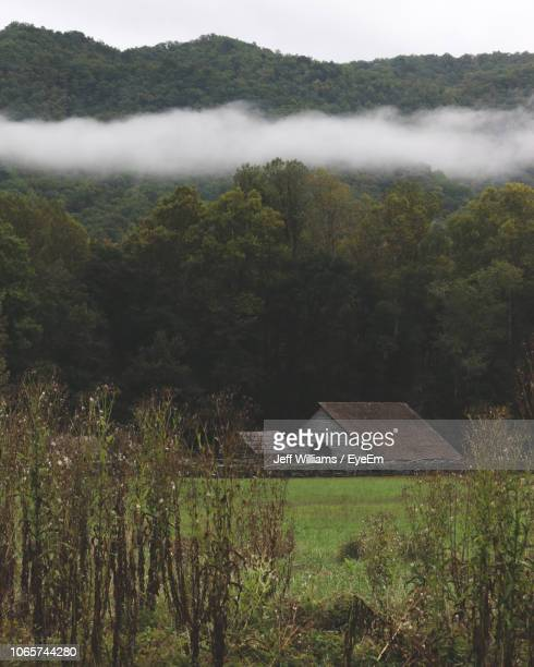 scenic view of trees and plants growing on land - appalachia stock pictures, royalty-free photos & images
