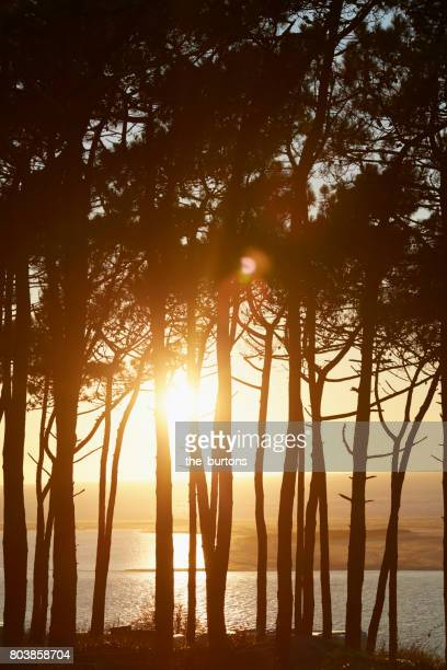 scenic view of trees and sea at sunset