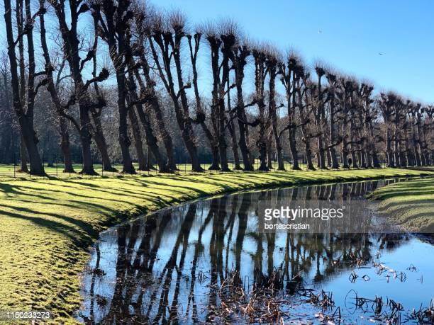 scenic view of trees by lake against sky - bortes foto e immagini stock