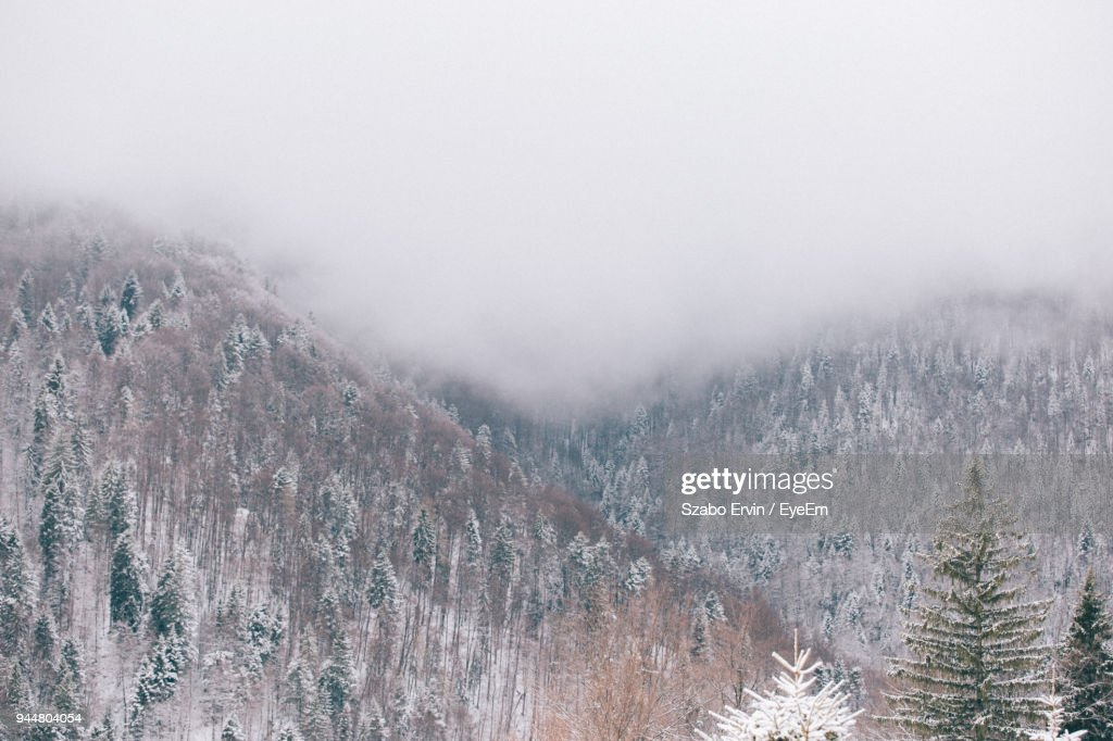 Scenic View Of Trees During Winter Against Sky : Stock Photo