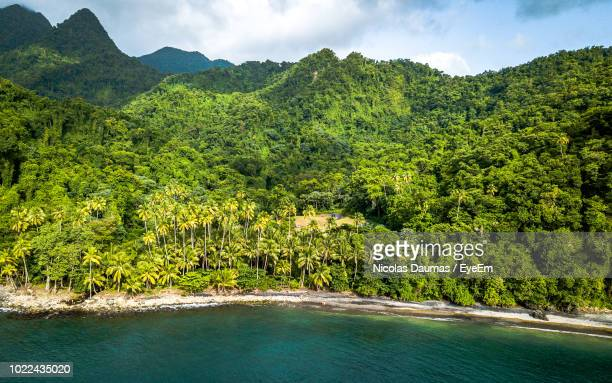 scenic view of trees growing in forest - martinique stock photos and pictures