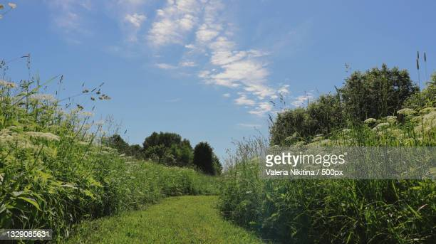 scenic view of trees growing on field against sky,russia - nikitina stock pictures, royalty-free photos & images
