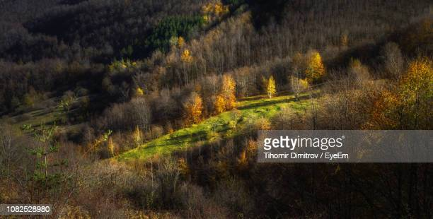 scenic view of trees growing on field in forest - dimitrov - fotografias e filmes do acervo