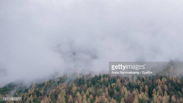scenic view of trees in forest against sky - mittenwald fotografías e imágenes de stock