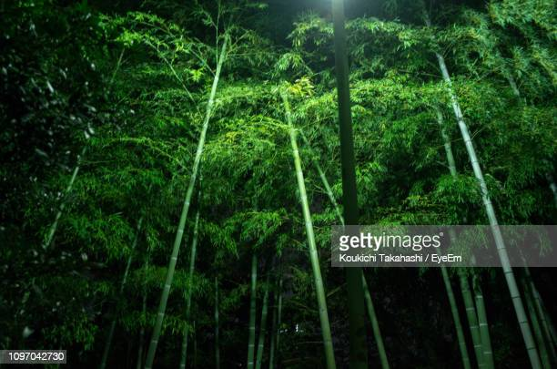 Scenic View Of Trees In Forest At Night