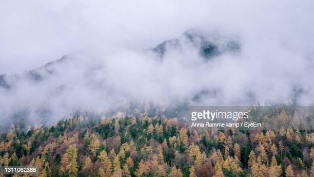 scenic view of trees in forest during autumn - mittenwald fotografías e imágenes de stock