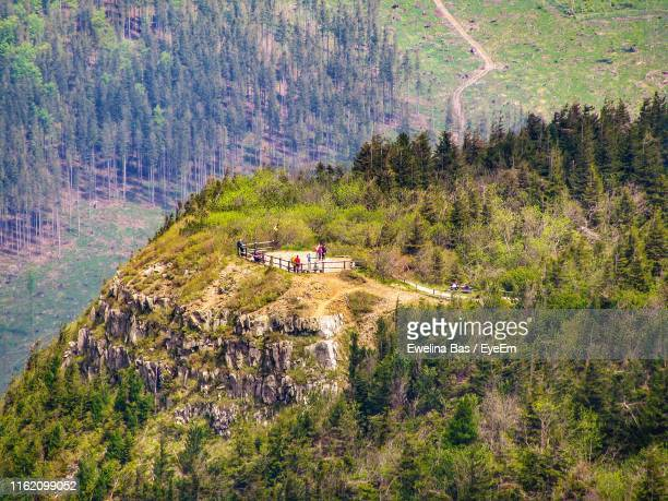 scenic view of trees in forest - babia góra mountain stock pictures, royalty-free photos & images