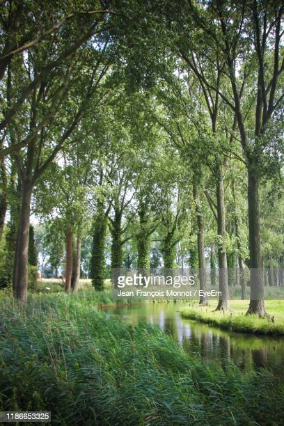 scenic view of trees in forest - damme stock pictures, royalty-free photos & images