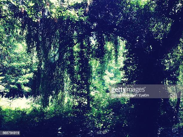scenic view of trees in forest - patrick grant stock pictures, royalty-free photos & images