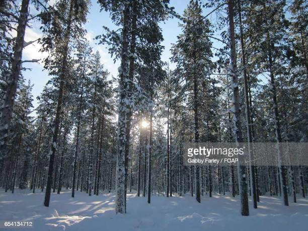 scenic view of trees in forest - gabby allen stockfoto's en -beelden