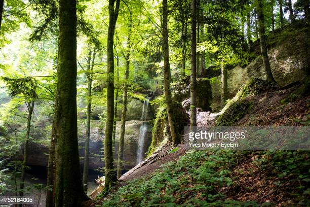 scenic view of trees in forest - wald stock pictures, royalty-free photos & images