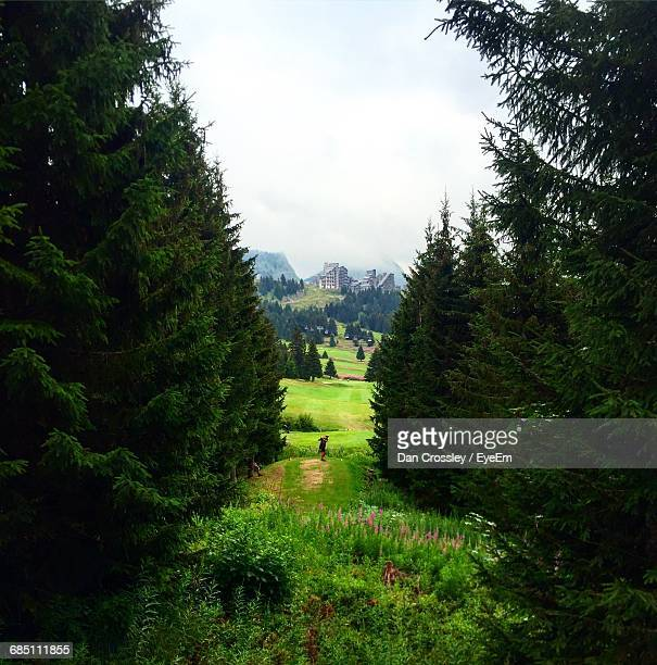 Scenic View Of Trees In Golf Course Against Sky