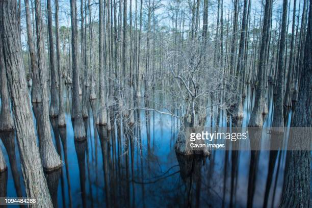 scenic view of trees in swamp at pine log state forest - pine log state forest stock photos and pictures
