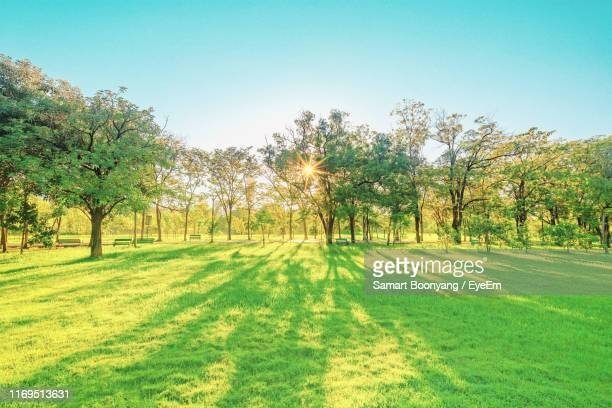 scenic view of trees on field against clear sky - soleggiato foto e immagini stock