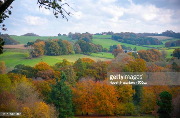 scenic view of trees on field against sky during autumn, midhurst, united kingdom - west sussex stock pictures, royalty-free photos & images