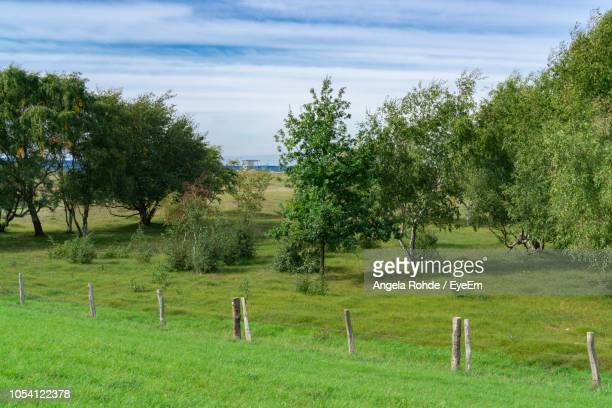 scenic view of trees on field against sky - angela rohde stock-fotos und bilder
