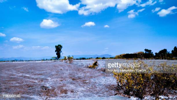 scenic view of trees on field against sky - munandar stock pictures, royalty-free photos & images