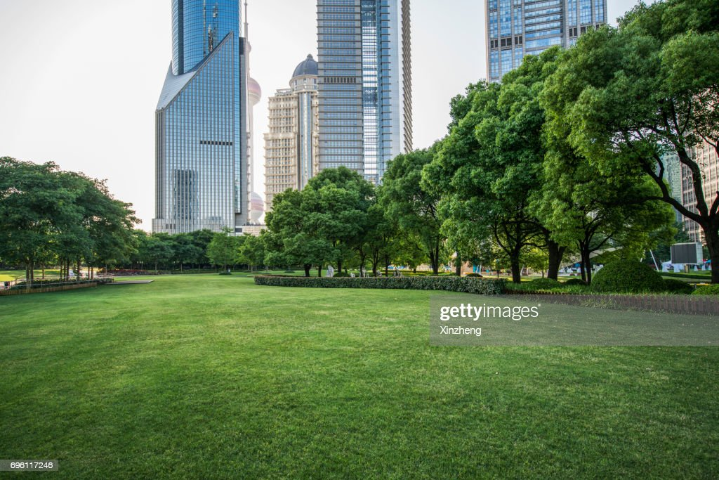 Scenic View Of Trees On Grassland At Park : Foto de stock