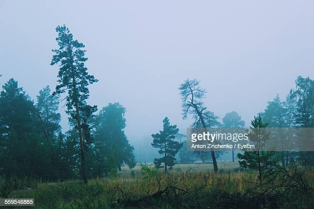 scenic view of trees on grassy field against sky - zinchenko stock pictures, royalty-free photos & images
