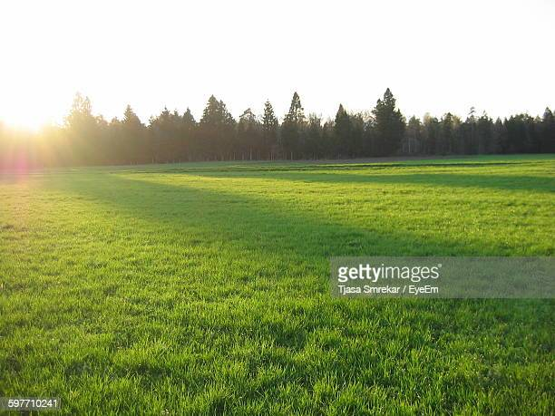 Scenic View Of Trees On Green Grass Against Sky