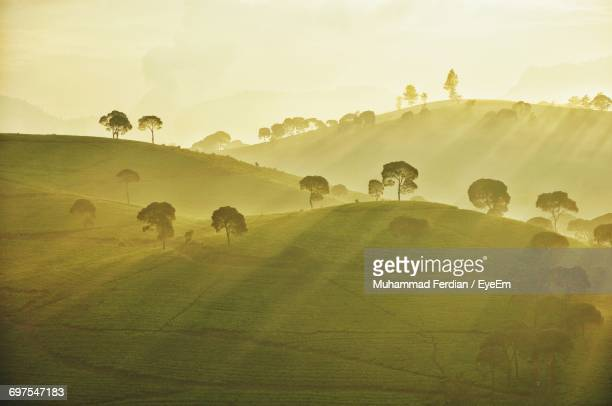 Scenic View Of Trees On Hill Landscape