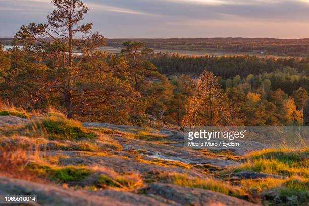 scenic view of trees on landscape against sky during autumn - muro stock photos and pictures