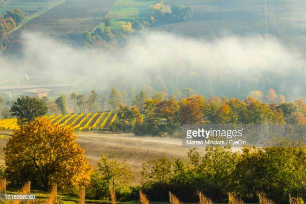 scenic view of trees on landscape during autumn - umbria stock pictures, royalty-free photos & images