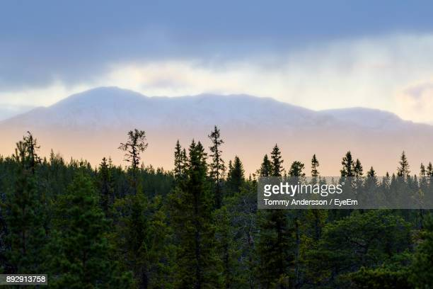 Scenic View Of Trees On Mountains Against Sky