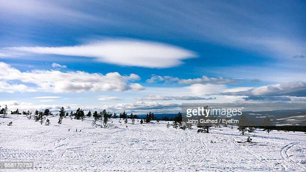 Scenic View Of Trees On Snowy Landscape