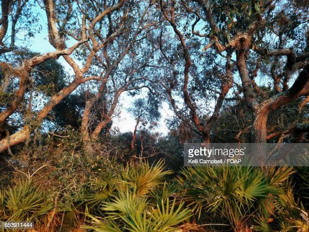 scenic view of trees - kelli campbell stock pictures, royalty-free photos & images