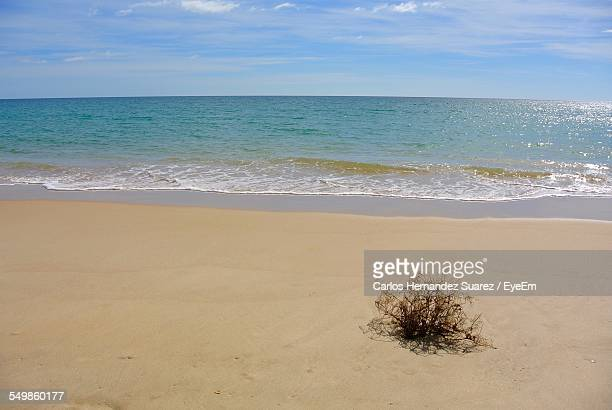 scenic view of tropical beach against sky - suarez stock pictures, royalty-free photos & images