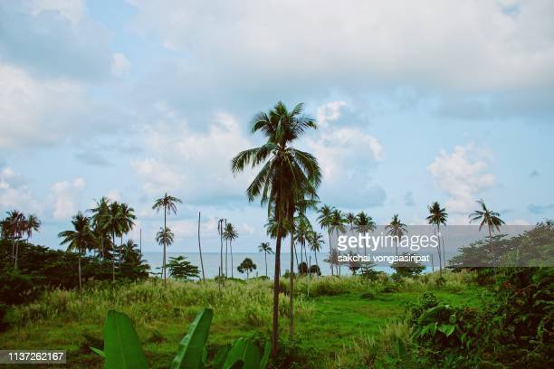 scenic view of tropical trees on the beach against sky at koh chang island in thailand - india summer stock-fotos und bilder