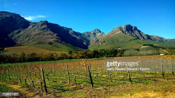 Scenic View Of Vineyard Against Blue Sky