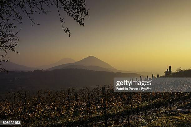 scenic view of vineyard against clear sky during sunset - fabrizio penso foto e immagini stock