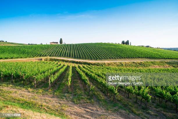 scenic view of vineyard against sky - vineyard stock pictures, royalty-free photos & images