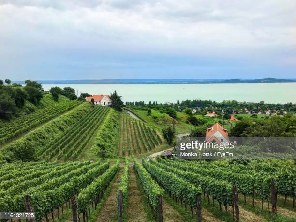 scenic view of vineyard against sky - hungary stock pictures, royalty-free photos & images