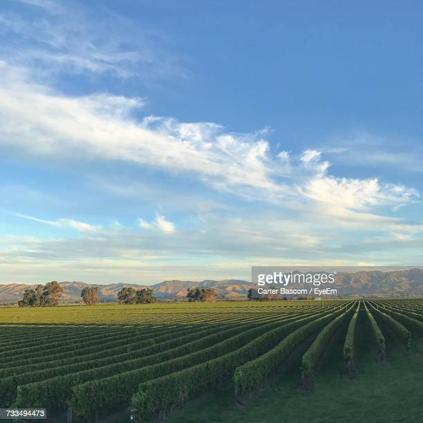 scenic view of vineyard against sky - marlborough new zealand stock pictures, royalty-free photos & images
