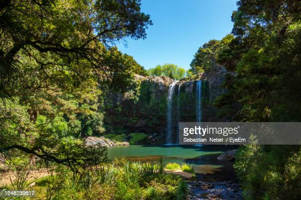 scenic view of waterfall amidst trees in forest against sky - whangarei heads stock pictures, royalty-free photos & images