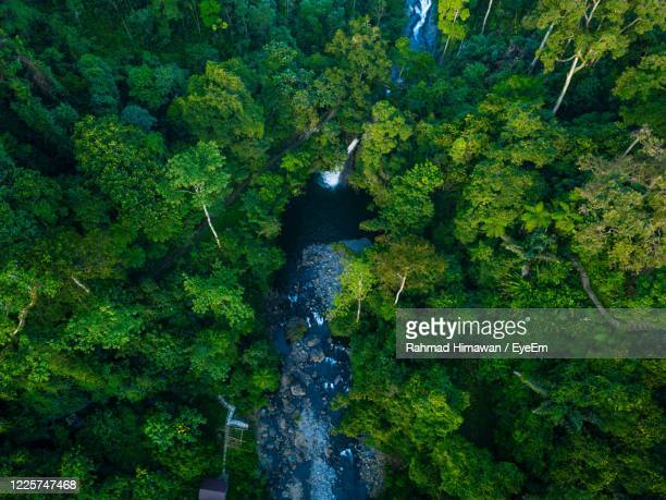 scenic view of waterfall amidst trees in forest - rahmad himawan stock pictures, royalty-free photos & images