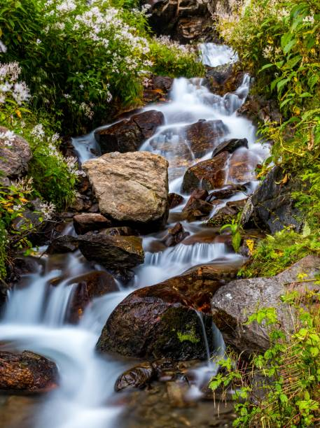 Scenic View Of Waterfall In Forest, Barkot, India