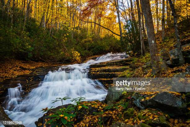 scenic view of waterfall in forest during autumn - barry wood stock pictures, royalty-free photos & images