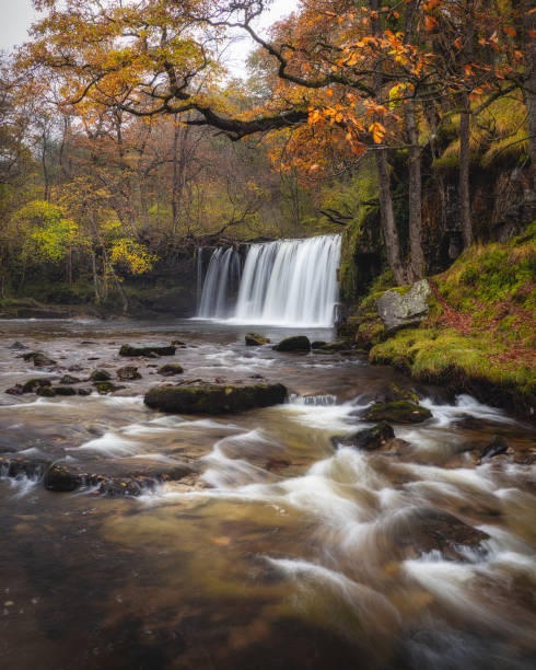 Scenic view of waterfall in forest during autumn,Glyn Tarell,Brecon,United Kingdom,UK