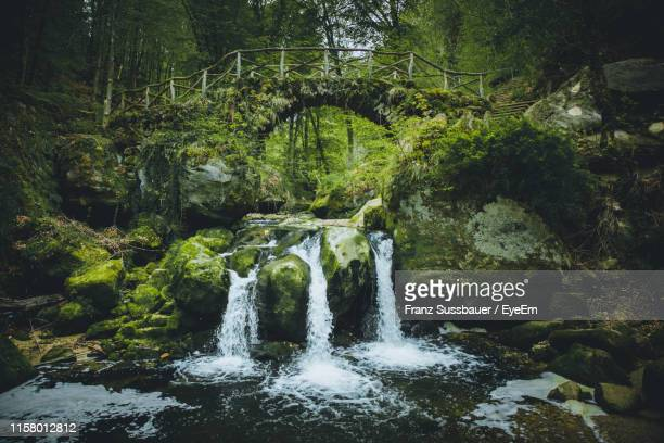 scenic view of waterfall in forest - リュクサンブール州 ストックフォトと画像